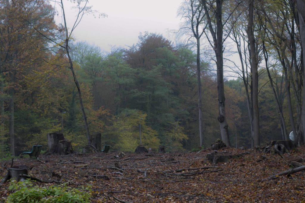 Abattages des abres le long des bois